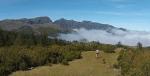 Dog Trail Madeira