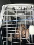 An Update on the 50 dogs in Camara de Lobos