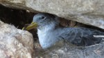 Project receives funding for bird conservation.