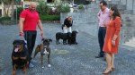 CÂMARA DO FUNCHAL PROMOTES NEW CAMPAIGN OF FREE VACCINATION FOR DOGS