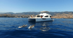 Whale and Dolphins- An Amazing Experience--Save 20%
