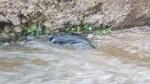 Three New Born Dogs Found Dead in a Levada