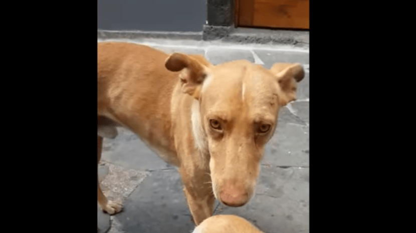 PARISH DENIES RESPONSIBILITY FOR STRAY DOGS ON MONTE