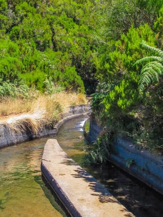 beginning of levada do alecrim trail trout basin