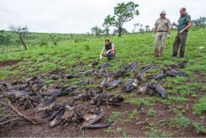 The African Vulture Crisis