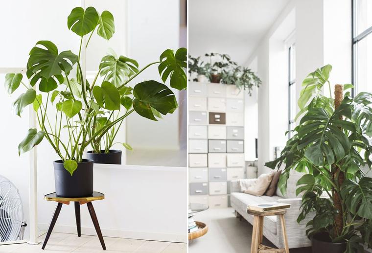 dcoration bureau plantes