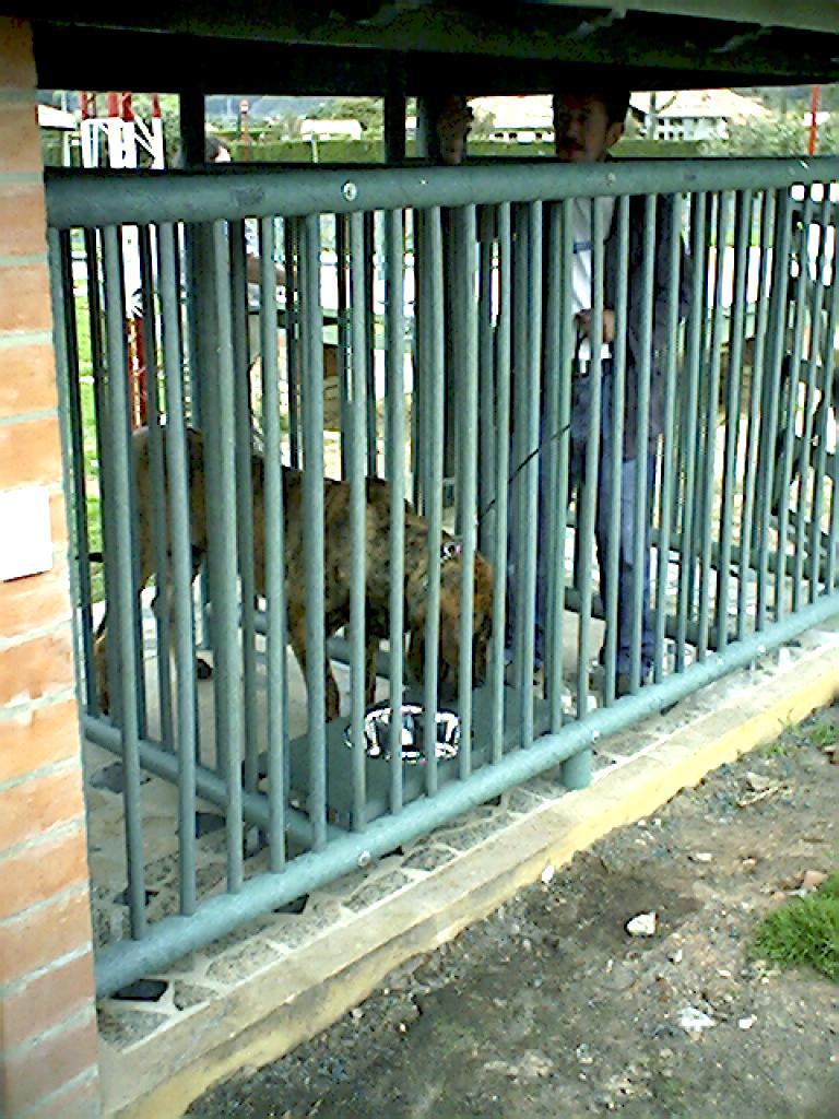 Casas Perros Mascotas Perreras pritorias Corrales Establos especies menores 0 0