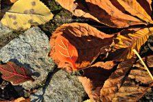 stoffspiel-blaetter-orange-mit-gelb
