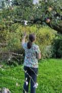Äpfel pflücken in Heikes Garten beim Nähtreff.