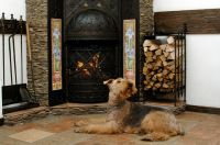 The Mad Hatter Animal Fireplace Safety - Indianapolis IN ...