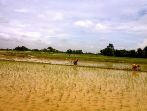 Women planting rice in the village of Jhouwa Guthi