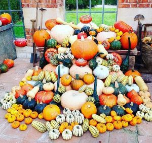 autumn pumpkin collection