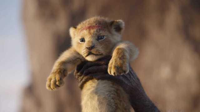"""Risultato immagini per il re leone 2019"""""""