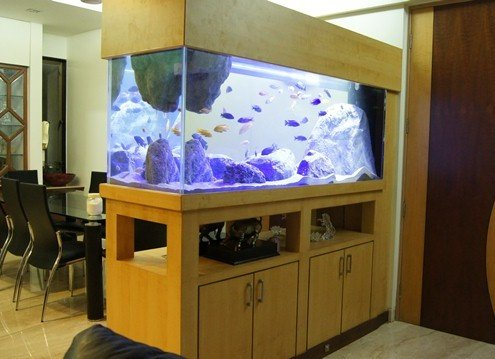 custom glass tank by madoverfish