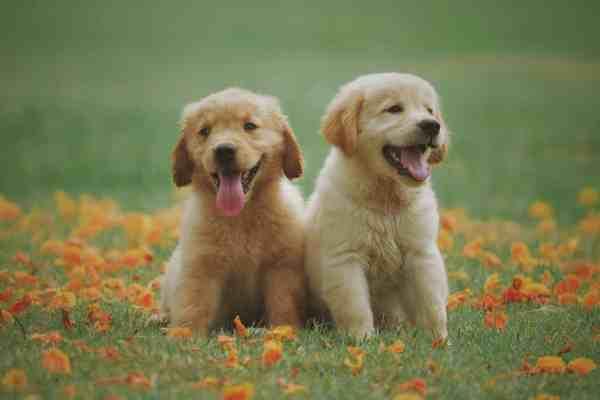 ¿Vas a adoptar un cachorro? Algunas cosas que debes saber