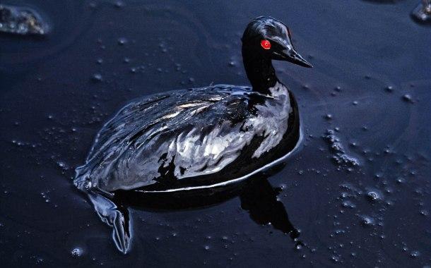 Le invenzioni della propaganda occidentale. Il caso del cormorano nero