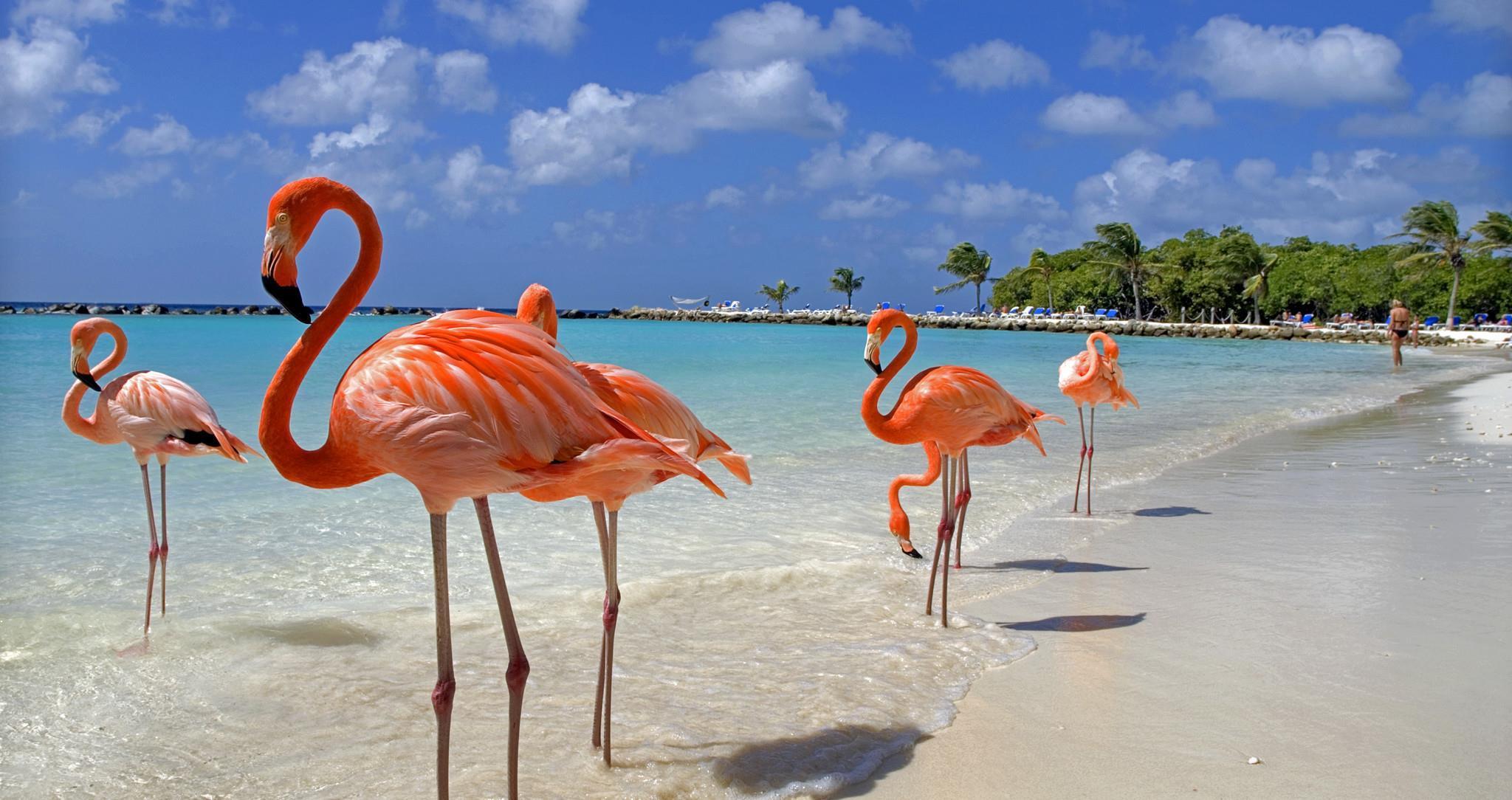 Storia dell'isola di Aruba