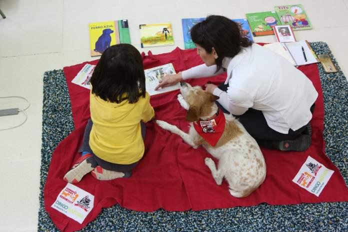 Cuatro colegios de Tres Cantos desarrollan un programa pionero en España: 'Perros y Letras' 2