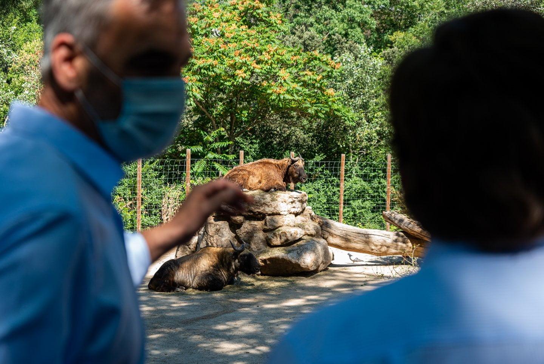 Zoo y Parque de Atracciones, el regreso de dos 'clásicos' de verano 7