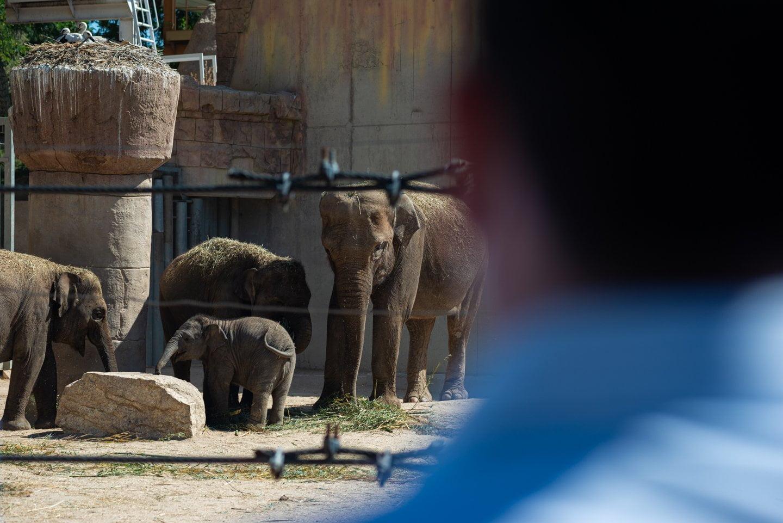 Zoo y Parque de Atracciones, el regreso de dos 'clásicos' de verano 8