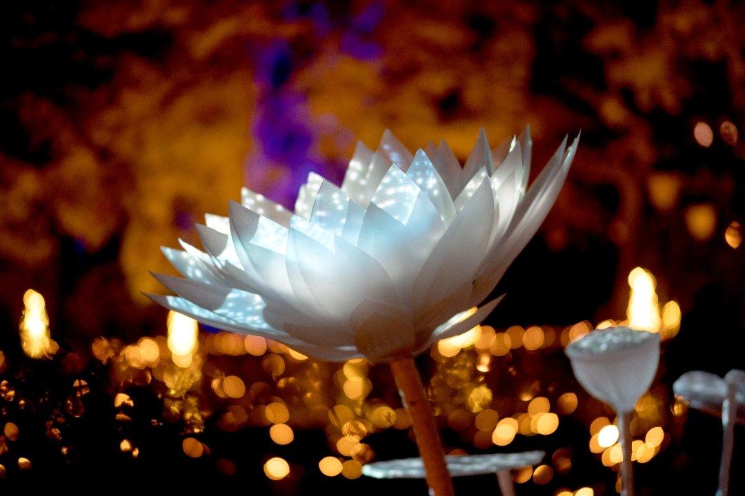 La luz navideña enciende el Jardín Botánico 6