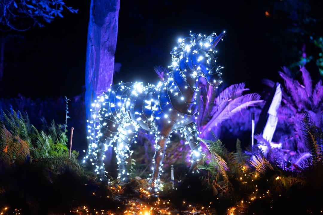 La luz navideña enciende el Jardín Botánico 7