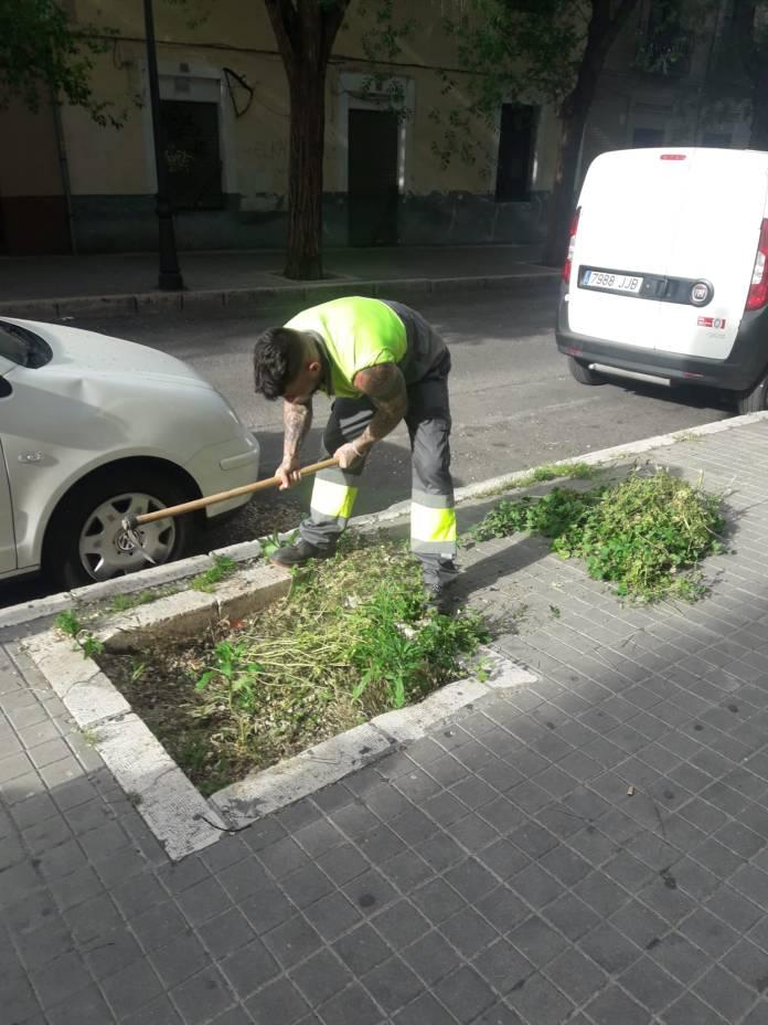 'Un alcorque, un árbol', la campaña para repoblar Aranjuez 1