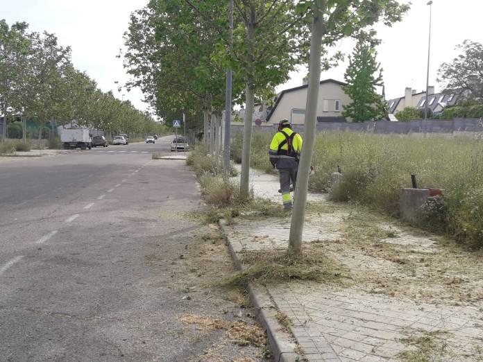 'Un alcorque, un árbol', la campaña para repoblar Aranjuez 2