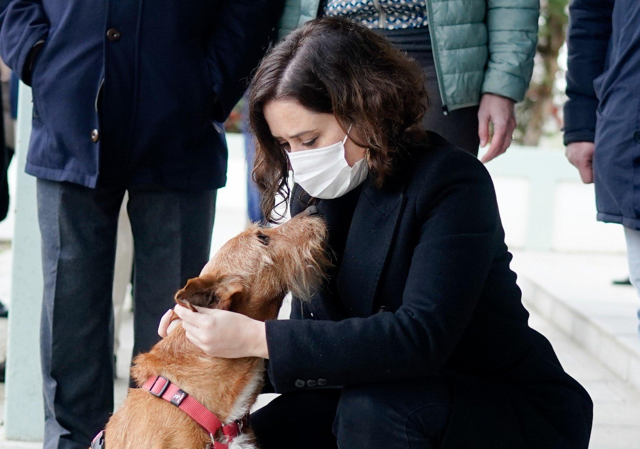 La adopción de animales de compañía crece un 40% durante la pandemia 1