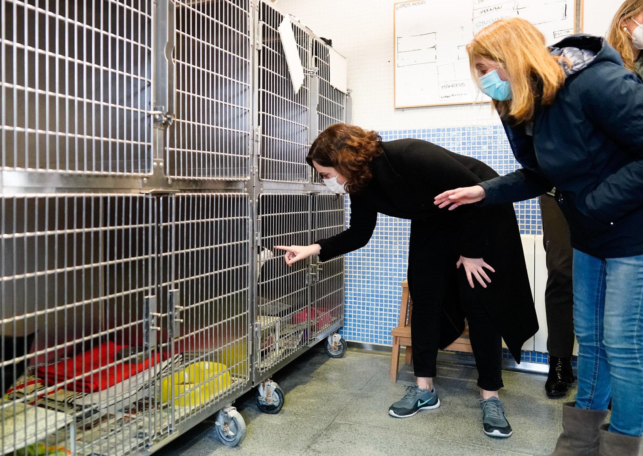 La adopción de animales de compañía crece un 40% durante la pandemia 2