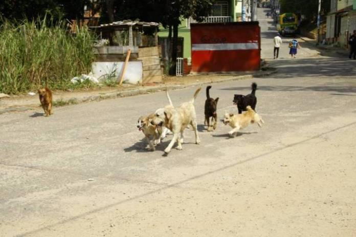 Nueva área municipal de Bienestar Animal para Alcobendas 1
