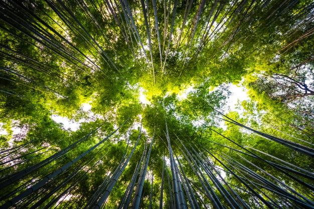 Una Semana del Medio Ambiente 2021 de Sanse centrada en el reciclaje 2