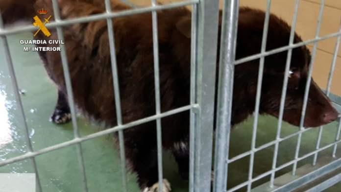 Dos detenidos por la muerte y maltrato de los perros de una residencia canina 2