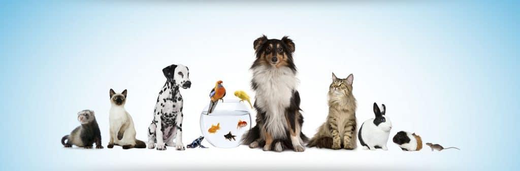 Licencia de Actividad clínica veterinaria 1024x337