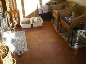 La Madriguera Informacin cuidados Alojamiento Conejos