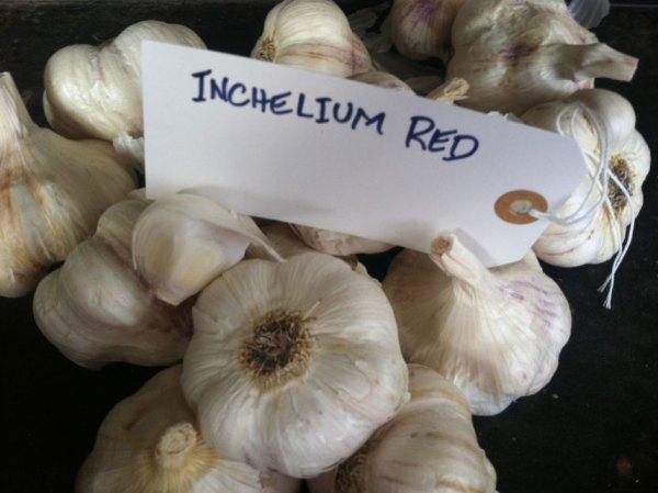 Inchelium Red Garlic