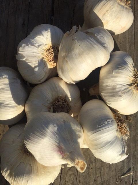Asian Tempest Organic Garlic