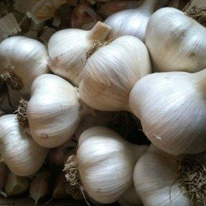 Kettle River Garlic