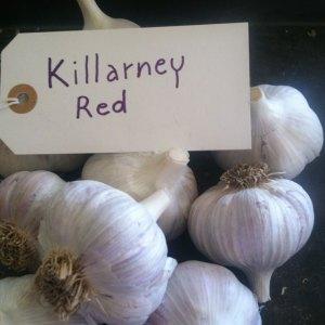 Killarney Red Garlic
