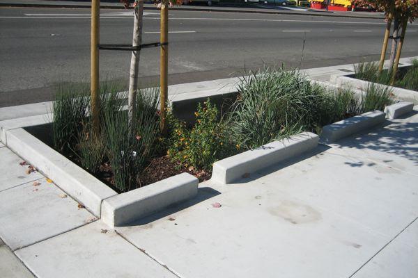 Raised Planter Box Plants