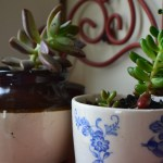 Using Succulents in Your Decor