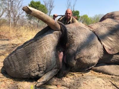 2019-Elephant-IMG_4992