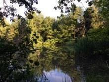 Waldsee, Lehnheim bei Grünberg