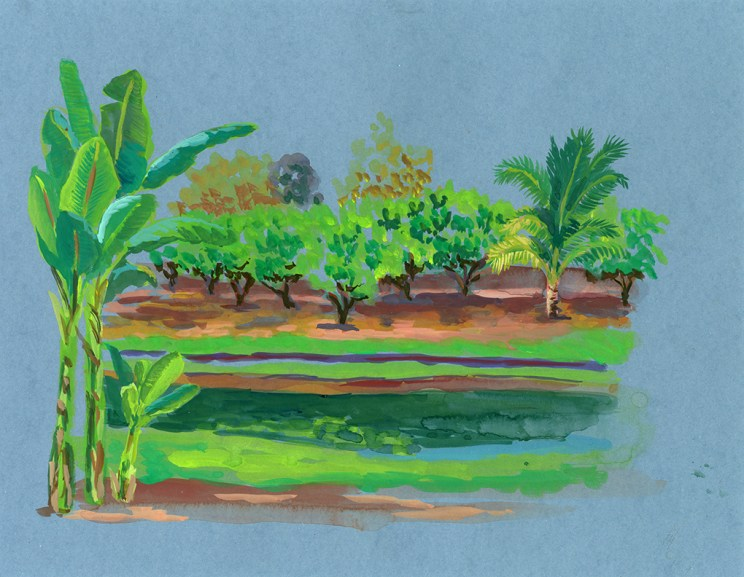 Champ de manguiers et bananiers, Li, gouache sur papier gris, 32x24 cm
