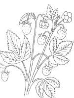 Malvorlage Erdbeere 29 zum Ausdrucken   Märchen aus aller ...