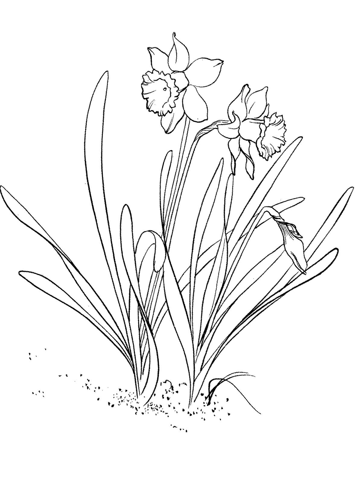 Malvorlagen Frühling 14 kostenlos Märchen aus aller Welt
