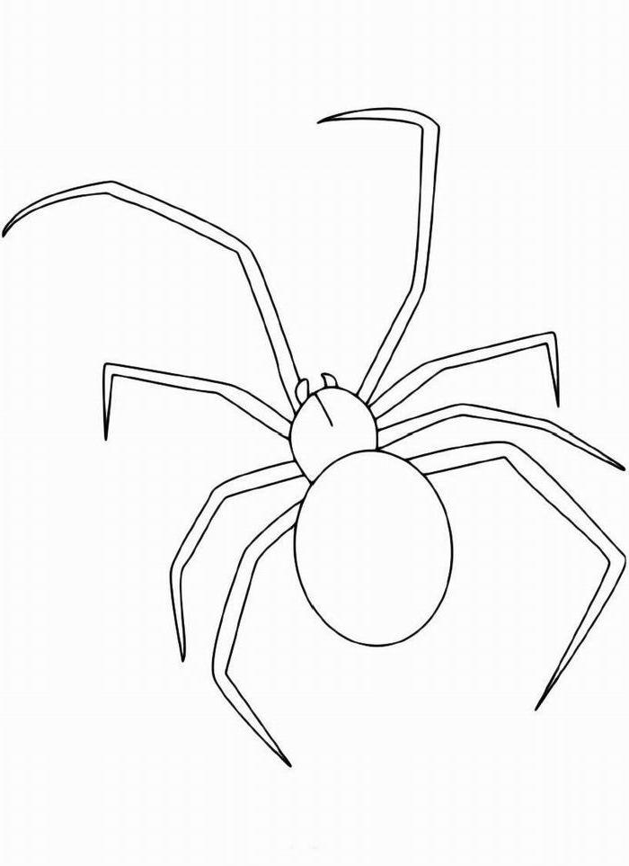 Ausmalbilder Malvorlagen - Spinne kostenlos zum