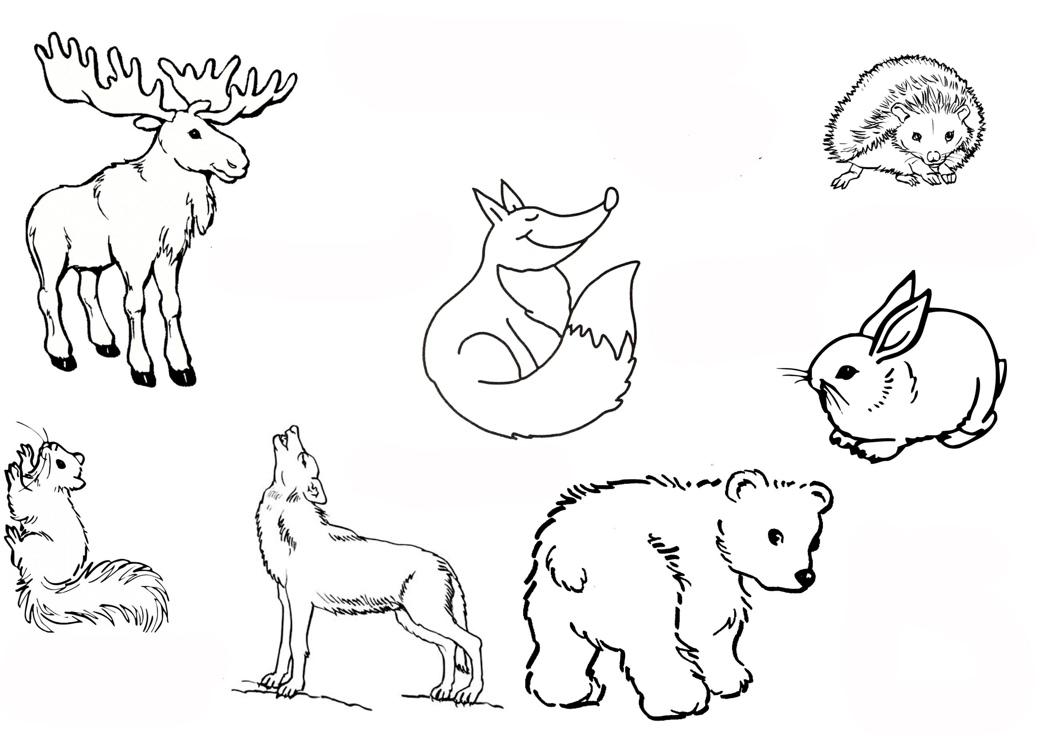 Ausmalbilder Malvorlagen - Waldtiere kostenlos zum