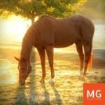 Paard verzekering