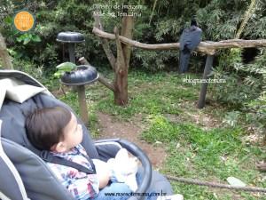 Zoo de Gramado